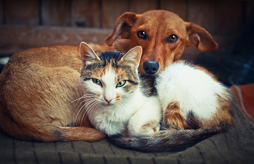 Cute dog with cat. Love